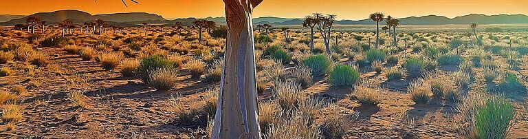 Hantam Karoo & Upper Karoo Accommodation banner